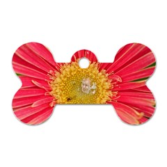 A Red Flower Dog Tag Bone (Two Sided)