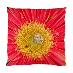 A Red Flower Cushion Case (one Side)