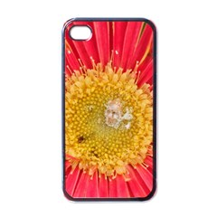 A Red Flower Apple iPhone 4 Case (Black)