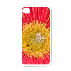 A Red Flower Apple iPhone 4 Case (White)