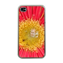 A Red Flower Apple iPhone 4 Case (Clear)