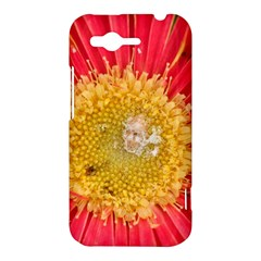 A Red Flower HTC Rhyme Hardshell Case