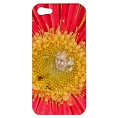 A Red Flower Apple iPhone 5 Hardshell Case