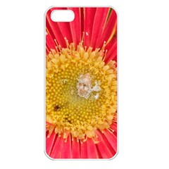 A Red Flower Apple Iphone 5 Seamless Case (white)