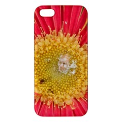 A Red Flower iPhone 5 Premium Hardshell Case