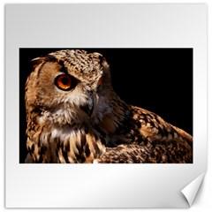 Owl Canvas 16  X 16  (unframed)