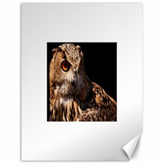 Owl Canvas 18  X 24  (unframed)