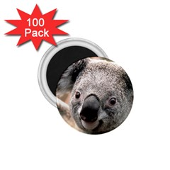 Koala 1 75  Button Magnet (100 Pack)