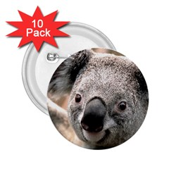 Koala 2.25  Button (10 pack)