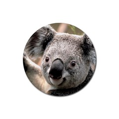 Koala Drink Coasters 4 Pack (Round)