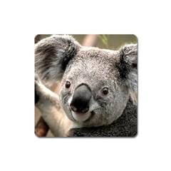 Koala Magnet (Square)