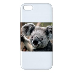 Koala iPhone 5 Premium Hardshell Case