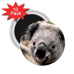Koala 2 25  Button Magnet (10 Pack)