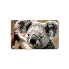 Koala Magnet (Name Card)