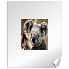 Koala Canvas 11  X 14  (unframed)