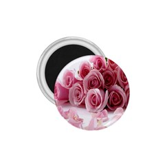Pink Roses 1.75  Button Magnet