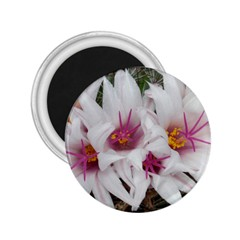 Bloom Cactus  2.25  Button Magnet