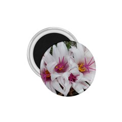 Bloom Cactus  1.75  Button Magnet
