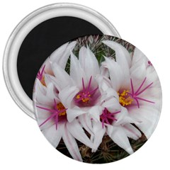 Bloom Cactus  3  Button Magnet