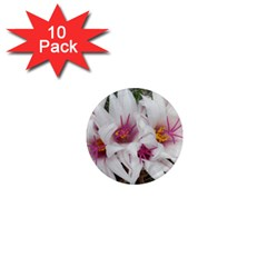 Bloom Cactus  1  Mini Button Magnet (10 pack)