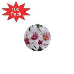 Bloom Cactus  1  Mini Button Magnet (100 pack)