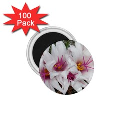 Bloom Cactus  1 75  Button Magnet (100 Pack)