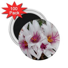 Bloom Cactus  2.25  Button Magnet (100 pack)
