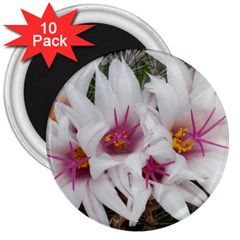 Bloom Cactus  3  Button Magnet (10 pack)