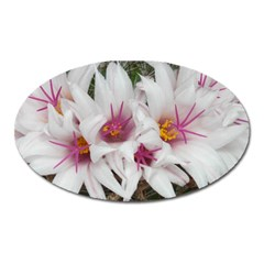 Bloom Cactus  Magnet (Oval)