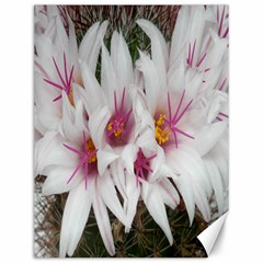 Bloom Cactus  Canvas 12  x 16  (Unframed)