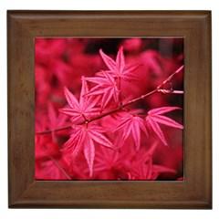 Red Autumn Framed Ceramic Tile