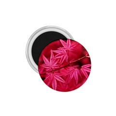 Red Autumn 1.75  Button Magnet