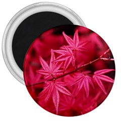 Red Autumn 3  Button Magnet