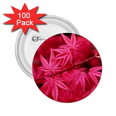 Red Autumn 2.25  Button (100 pack)