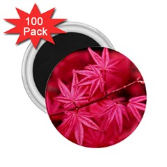 Red Autumn 2.25  Button Magnet (100 pack)