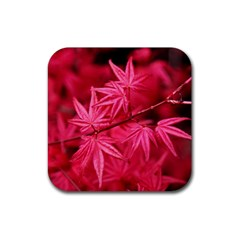 Red Autumn Drink Coasters 4 Pack (square)