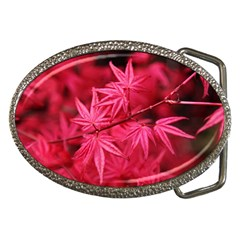 Red Autumn Belt Buckle (oval)