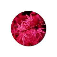 Red Autumn Drink Coasters 4 Pack (Round)