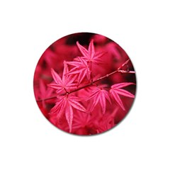 Red Autumn Magnet 3  (Round)