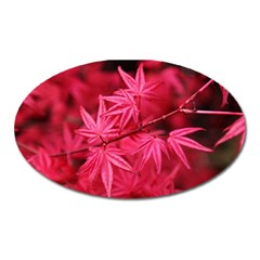 Red Autumn Magnet (Oval)