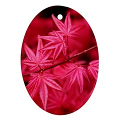 Red Autumn Oval Ornament (two Sides)