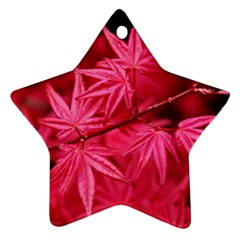 Red Autumn Star Ornament (two Sides)