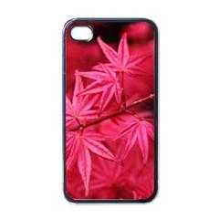 Red Autumn Apple iPhone 4 Case (Black)