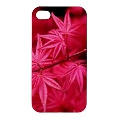 Red Autumn Apple iPhone 4/4S Hardshell Case