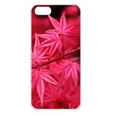 Red Autumn Apple iPhone 5 Seamless Case (White)