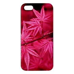 Red Autumn iPhone 5 Premium Hardshell Case