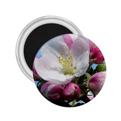 Apple Blossom  2.25  Button Magnet