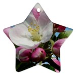 Apple Blossom  Star Ornament Front