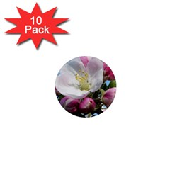 Apple Blossom  1  Mini Button Magnet (10 Pack)