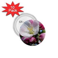 Apple Blossom  1.75  Button (10 pack)